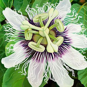 passion-fruit-flower.jpg